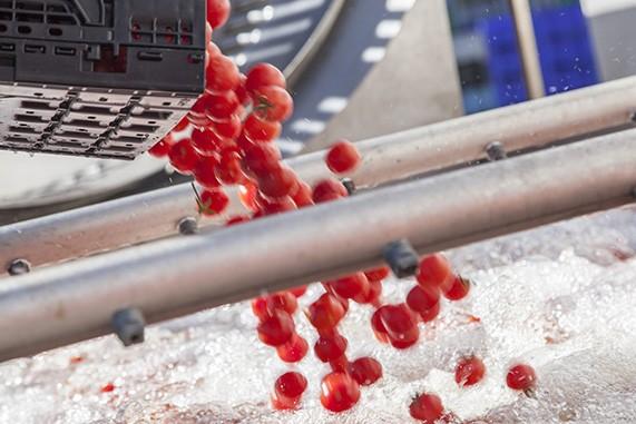 passata di pomodorino ciliegino