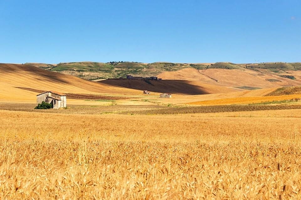 campi di grano in Puglia