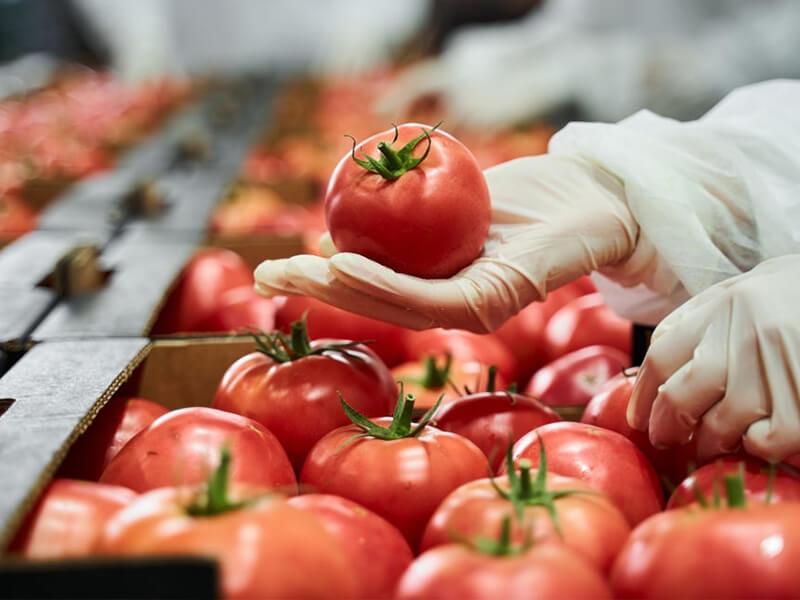 pomodori di oggi vs pomodori di ieri